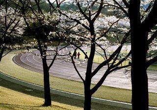 Running-trees-track